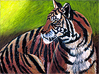 """Tiger, Tiger"", fine art giclee on archival watercolor paper"