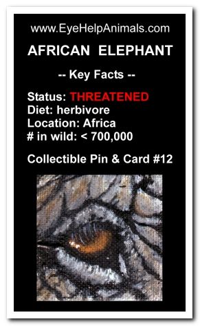 Eye Help Animals African Elephant Wildlife Collectible Pin #12 - Front