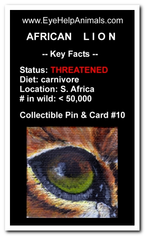 Eye Help Animals African Lion Wildlife Collectible Pin #10 - Front