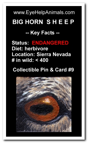 Eye Help Animals Bighorn Sheep Wildlife Collectible Pin #9 - Front