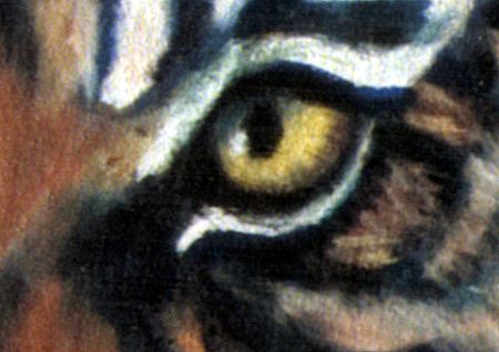Tiger, Tiger by artist and cofounder DJ Geribo - closeup detail of tiger's eye