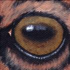 Elk Eye Wildlife Collectible Pin