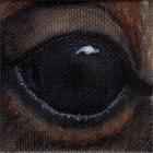 American Bison Eye Wildlife Collectible Pin