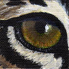 Bobcat Eye Wildlife Collectible Pin