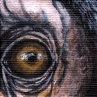 Chimpanzee Eye Wildlife Collectible Pin