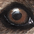 Grizzly Bear Eye Wildlife Collectible Pin