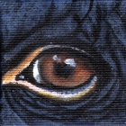 Orangutan Eye Wildlife Collectible Pin