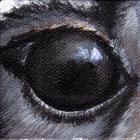 Western Grey Kangaroo Eye Wildlife Collectible Pin