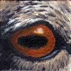 Bighorn Sheep Eye Wildlife Collectible Pin
