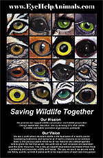 Exclusive Wildlife Eyes Poster Design at EyeHelpAnimals.com